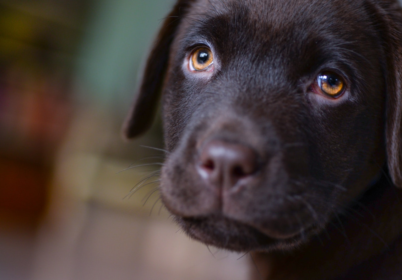 Don't let your puppy suffer because of Covid-19